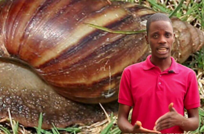 KonnectFarm sets up African second biggest snail farm in Ekiti
