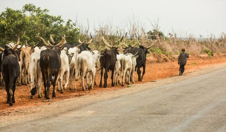 Cattle Dealers threaten strike over killing of members
