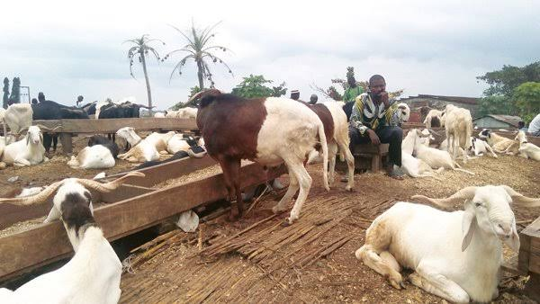 Eid-el-Kabr: Ram prices gallop out of faithfuls' budgets