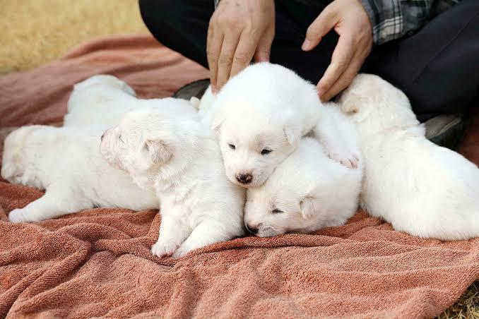 South Korea's President raises dog meat ban